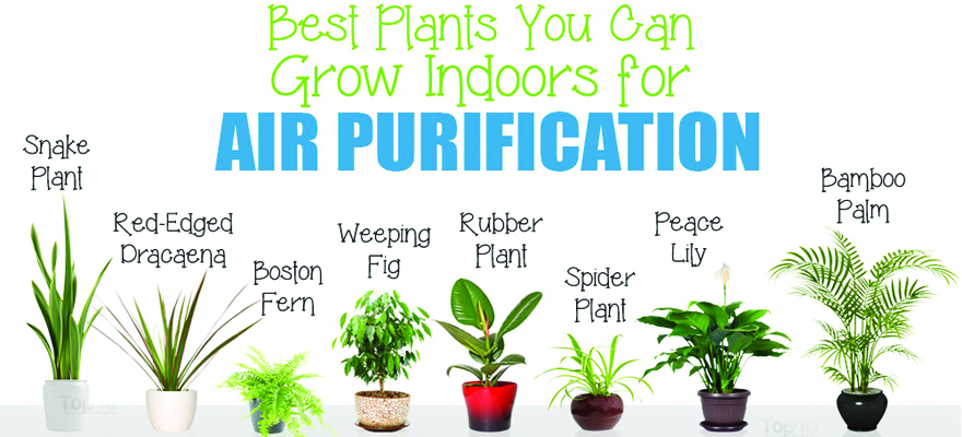 Air-Purifying Plants for Office and Home